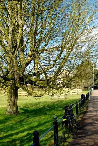 Green tree closer