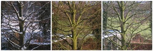Tree life,