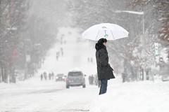 White Umbrella in Snow Storm (Mark E. Miller) Tags: road city winter woman snow storm umbrella fun dc washington driving sightseeing snowstorm roadtrip adventure sights connecticutavenue snowpocalypse dcsights snowmageddon eastcoastoverdose sightseeingdc blizzardof2010