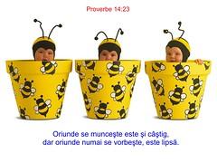 Proverbe 14-23 (Palosi Marton) Tags: kids childrens copii crestine versete biblice
