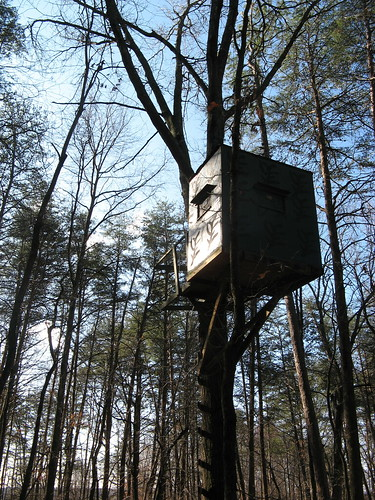 Somebody's tree house