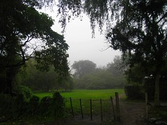 RIMG6155x1000 (Weltbummler) Tags: yerbabuena tucumn bosquenublado nuboselva