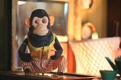 Sans one cymbal... (catjej) Tags: antique albertacanada nanton mechanicalmonkey catjej monkeyandcymbals