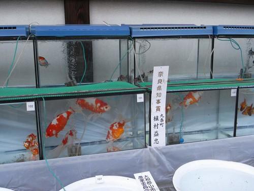 大和郡山お城まつり-08