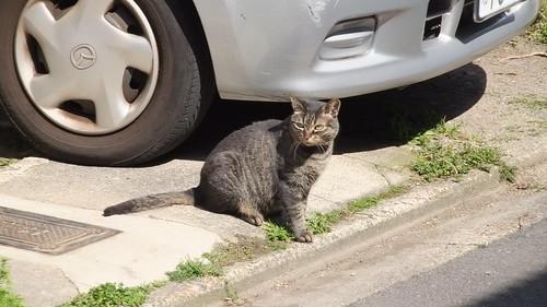 Today's Cat@2010-04-08