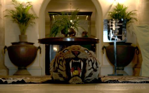 tiger rug at kedleston hall