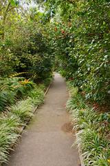 camellia path