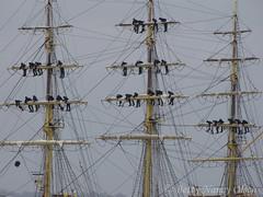 Sailors. Georg Stage of Denmark (Betty Olsen) Tags: school sky denmark ship stage sailors mast georg