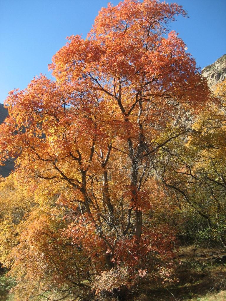 Fall Foliage 2009 026