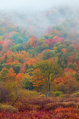 Crazy Vermont Color in New England (kevin mcneal) Tags: autumn vermont seasons fallcolor image picture newengland foliage woodstock kevinmcneal