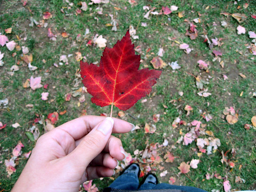 deep red leaf