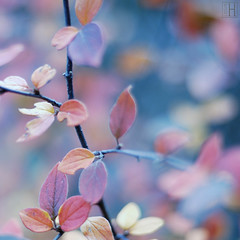 autumn potpourri branched (gregor H) Tags: autumn leaves leaf mood branch fresh explore harmony frontpage gettyimages potpourri branched infinestyle