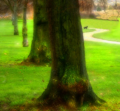 Dog in the Park (Andrea Kennard) Tags: park dog tree green grass path trunk enfield greengrass albanyparkenfield