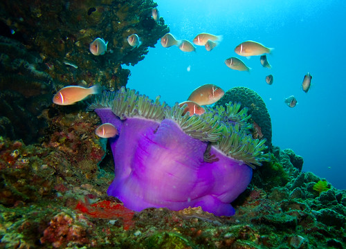 Underwater Gulf of Thailand - White Rock 05