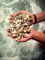 (paigella16) Tags: ocean shells beach friend florida shell springbreak sarasota holdingshells
