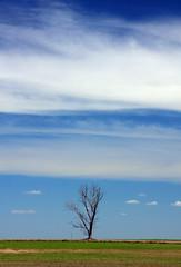 Solitria II (Miriam Cardoso de Souza) Tags: sky tree natureza natura cu rvore paisagens enquadramento antropologiavisual anawesomeshot miriamcardosodesouza peregrino27newvision