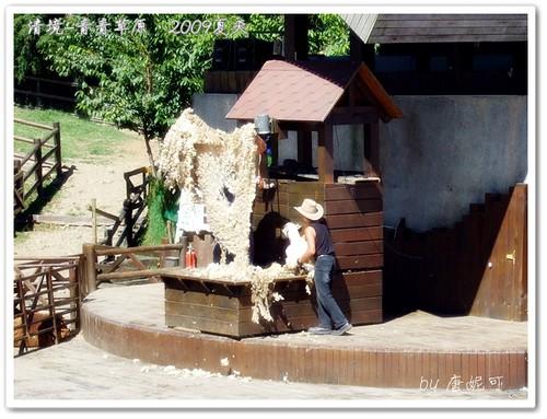 唐妮可☆吃喝玩樂過生活 拍攝的 20090802_清境青青草原29。