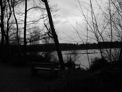 Tribute bench close to the Lake. (Charlface) Tags: wood trees sky lake water forest bench samsung tribute delamere