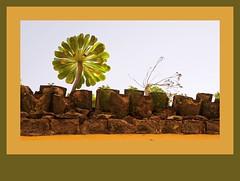 tejados (Olga Díez  (Caliope)) Tags: tenerife tejado lalaguna teja verode