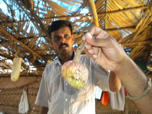Diveagar Deepak's home