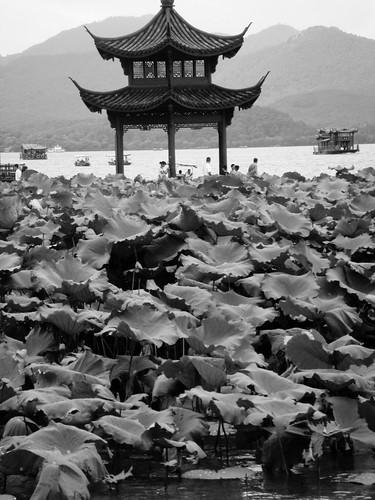 China (and home) Aug 09 044
