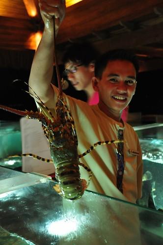 Fresh Lobster from Oyster Bar Aquarium