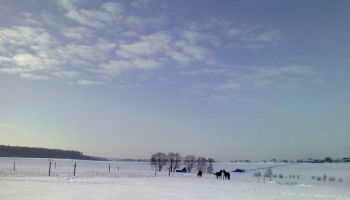 Nachmittagspferde (3) - Vorschau
