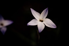 Garden Macro (IanLudwig) Tags: flower macro canon whiteflower purple flowerarrangements 100mm yellowflower pinkflower flowering 5d canon5d wildflowers f28 purpleflower flowerbouquet flowerarrangement purpleflowers flowerpetals flowergarden artificialflowers silkflowers beautifulflowers silkflower springflower yellowpurple purplerose flowerbulbs flowergardens hibiscusflower flowerseed plantsflowers roseflower bridalflowers flowerpetal plantsandflowers roseflowers gardenflower flowerphotos lilyflower flowerplant buyflowers purplepink flowerpictures purpleplant flowerseeds orchidflower weddingflower flowerplants flowerbouquets cheapflowers daisyflower purpleroses flowerbackground jasmineflower irisflower rosepurple purplesilk flowersbackground cmwdpurple purplewedding flowersonline canon5dmarkii discountflowers onlineflower canon100mmf28lis buyflower flowerswholesale wholesaleflower