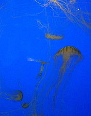 Mduses (Valentine294) Tags: colour aquarium larochelle mduse