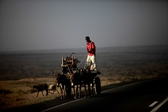 Going home (ingetje tadros) Tags: africa road travel red portrait man face animal canon community desert african candid transport culture streetphotography donkey tribal valley single remote cart ethiopia ethnic cultural tribo omo äthiopien etiopia streetphotographer travelphotography ethiopie etiopía エチオピア etiopija ethnie ethiopië 埃塞俄比亚 etiopien etiópia travelphotographer 埃塞俄比亞 etiyopya אתיופיה эфиопия 에티오피아 αιθιοπία 이디오피아 種族 етиопија 衣索匹亚 衣索匹亞 remoteingetjetadros