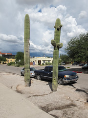 """I closed my eyes and held out my arms with my palms facing upward and ordered: """"For every automobile, an ornamental saguaro in gravel."""" (Tim Kiser) Tags: 2saguaros 2015 20151007 arizona arizonalandscape carnegiea carnegieagigantea gmcpickup gmcpickuptruck gmctruck img7810 northparkavenue october october2015 parkavenue pieallen pieallenhistoricdistrict pieallenneighborhood pimacounty pimacountyarizona tucson tucsonarizona tucsonlandscape tucsonstreetscape bedofgravel cactus dryscaping gravel landscape onstreetparking ornamentalsaguaros parkedcars partlysunny paved pavement pickuptruck saguaro saguaros saguarosingravel sidewalk southarizona southeastarizona southeasternarizona southernarizona streetparking streetsaguaros streetscape truck twosaguaros urbanlandscape view xeriscaping unitedstates"""