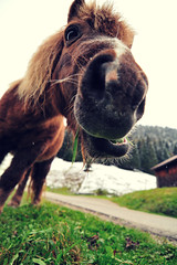 Pony Munch (christian.senger) Tags: horse brown green nature animal digital germany geotagged outdoors bavaria xpro nikon europe lawn frombelow pony crossprocessing oberstdorf frogperspective d300 antperspective nikoncapturenx2 christian_senger:year=2009