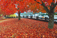 Oregon Autumn Part 4 (Ian Sane) Tags: park city autumn color fall leaves oregon canon ian four eos leaf fallcolor mark 4 part ii promenade 5d 2009 oregoncity sane