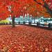 Oregon Autumn Part 4