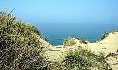 Wimereux-sandhills and oyats (april-mo) Tags: channel seasideresort sandhills coastaltown pasdecalais wimereux oyats northernfrance