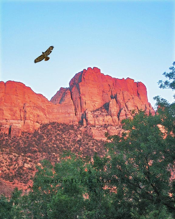 A lone red tailed hawk soars overhead as the sun sinks and lights up the red cliffs of Zion National Park