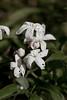 Tiny (Luke Gamon) Tags: flower canon bugs hybridis 28lmacro 100mm28l canon100mm28lmacro