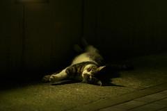 sweet pose (H2@Japan) Tags: street japan cat tokyo nikon kitty 日本 東京 猫 straycat d300 野良猫