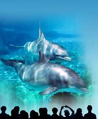 marine life park 2