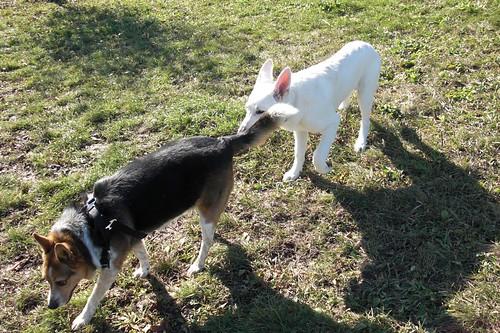 dog park Nov. 3-7