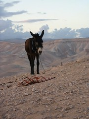 Donkey in wilderness