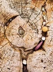 wood and stones (Erica Oram) Tags: wood pebble groyne spurn