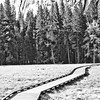 The Key is Now (Thomas Hawk) Tags: bw yosemite natureshand