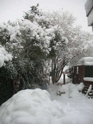 obligatory snowy garden shot