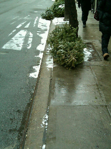 Christmas Trees on NYC Sidewalk
