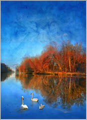 Sunday promenade (Jean-Michel Priaux) Tags: family famille blue autumn lake france cold tree art texture nature water illustration forest photoshop river painting way landscape canal pond nikon heaven paradise lough flood walk dream peinture dreaming bleu reflet fairy reflect alsace promenade unreal paysage hdr cygne waterway anotherworld savage fret swain ried d90 friesenheim neunkirch priaux theunforgettablepictures digitalflood zelsheim