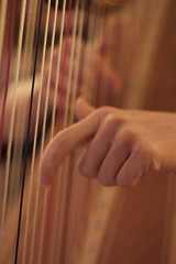 Detail plucking 2 (TalyaG1) Tags: music playing instrument harp