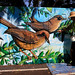 Superb Fairy-wren - Malurus cyaneus and Endangered - Dasyornis brachypterus Eastern Bristlebird and David Adams Murwillumbah's Co-ordinating Artist Treasures of the Tweed Mural Project - January 2010