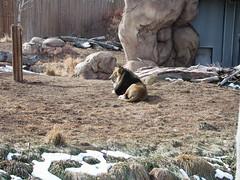 Zoo of Denver  DSCN0005