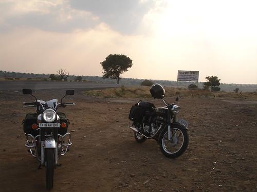 Resting Bulls just before Tuljapur